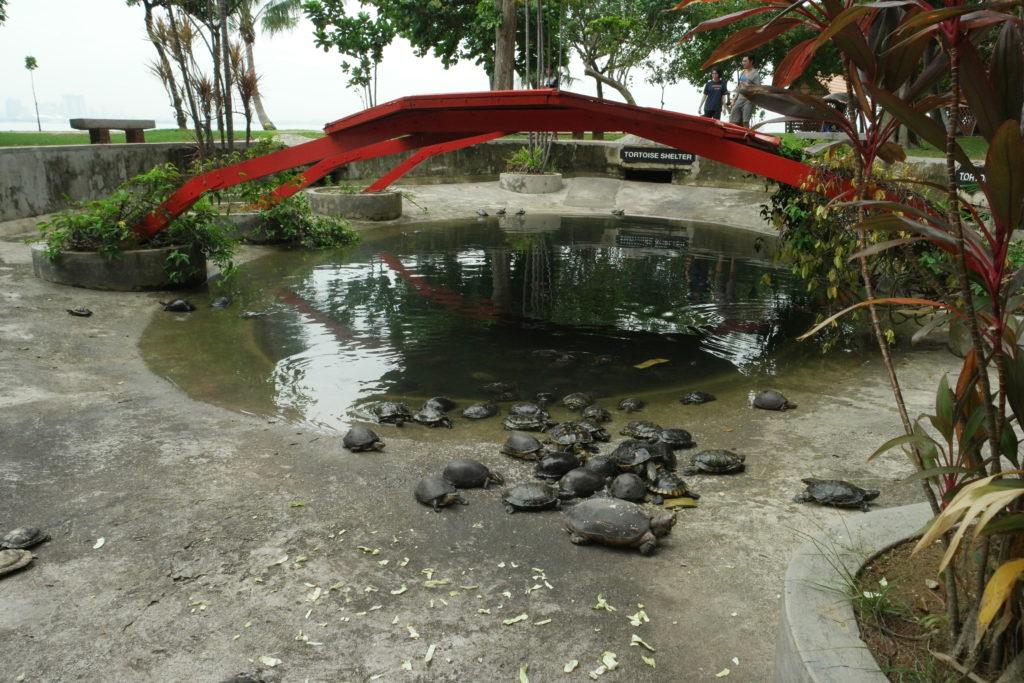 So many little tortoises here